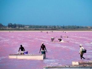 Pink Lake Senegal West Africa