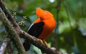 guyanas-bird_2007164b