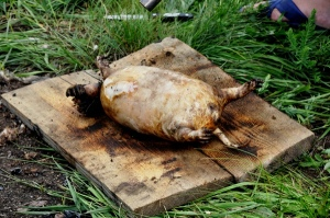 Boodog – Traditional Food in Mongolia