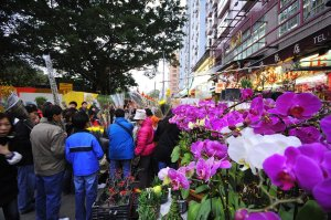 Flower Market, Prince Edward, Mong Kok, Hong Kong