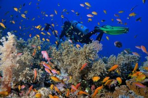 Scuba Diving, Perhentian Islands