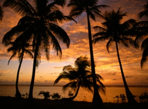 Belize, Barrier Reef, South Water Caye, Sunrise through Palm Trees