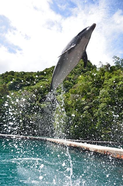 dolphin-palau-jumping-dolphin-dolphin-show