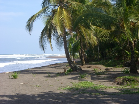 The_beach_at_Tortuguero,_Costa_Rica