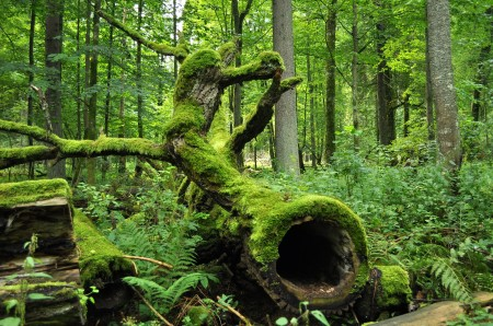 Bialowieza_National_Park_in_Poland0029
